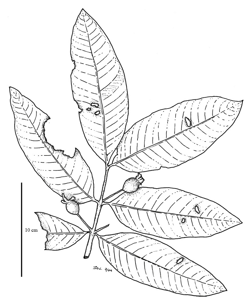 Free Oliver Sykes Coloring Pages Rainforest Plants Coloring Pages