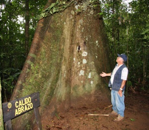 Base of large Ceiba pentandra tree with well-developed buttress (and Dr. Humberto Jimenez-Saa).
