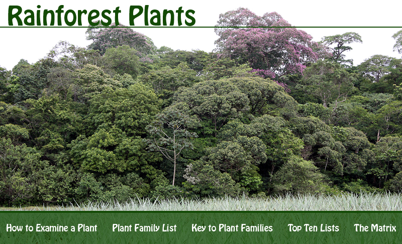 Rainforest Plants Banner.jpg